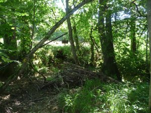 2013-08-01-bundeswald-donauwoerth-005